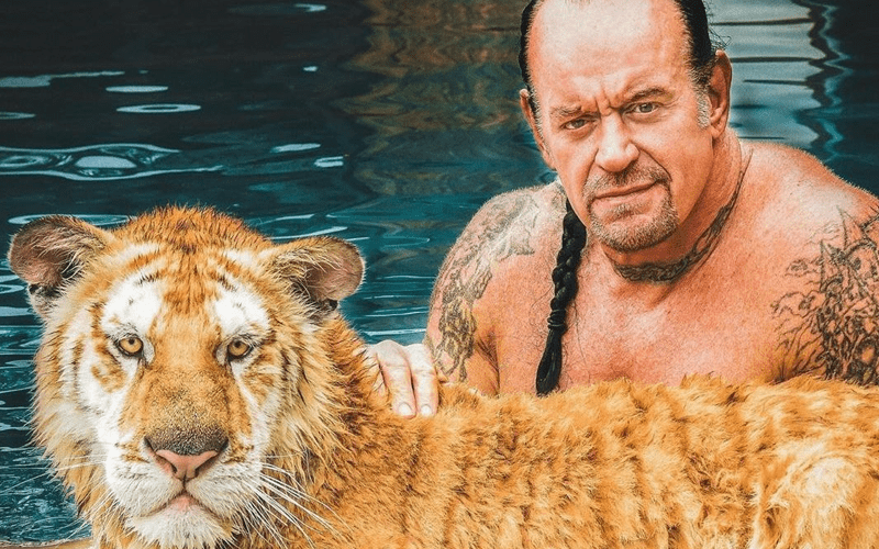 the-undertaker-tiger