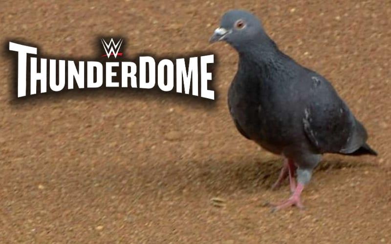 wwe-thunderdome-pigeon
