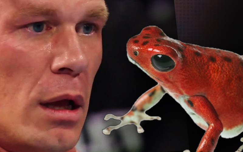 John-Cena-Frogs